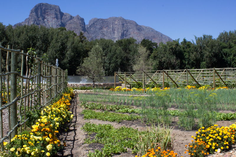 The kitchen garden at Boschendal with the Groot Drakenstein Mountains in the background
