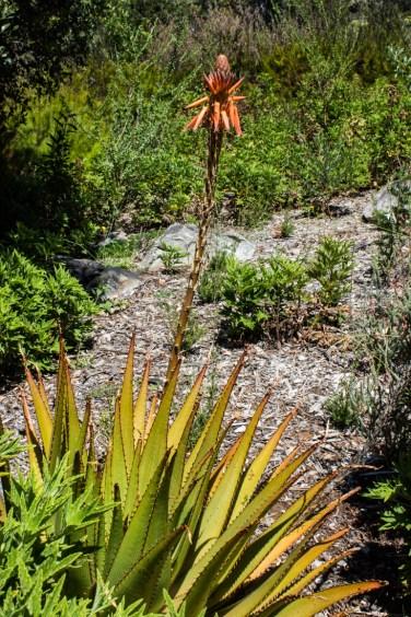 16-2-29 Kirstenbosch LR-2190