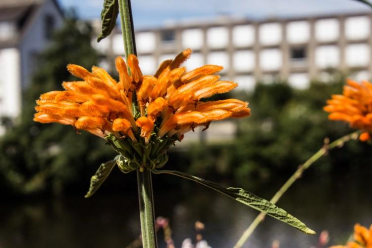 Flowers along the Blavet River, Pontivy