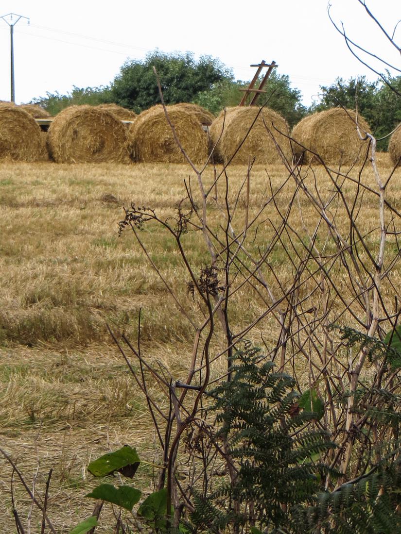 Harvesting around Locronan