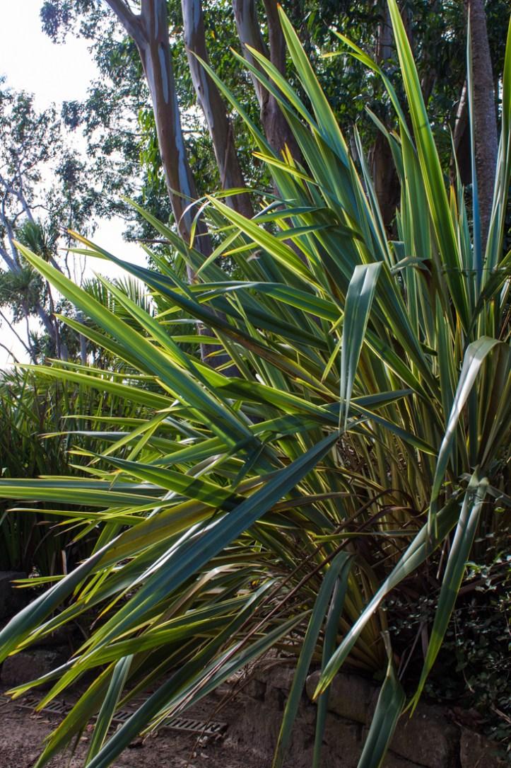 16-9-17-roscoff-exotic-garden-lr-0605