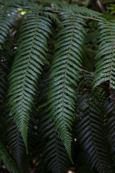 16-9-17-roscoff-exotic-garden-lr-0634