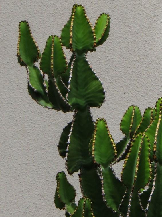 Succulents in Wellington
