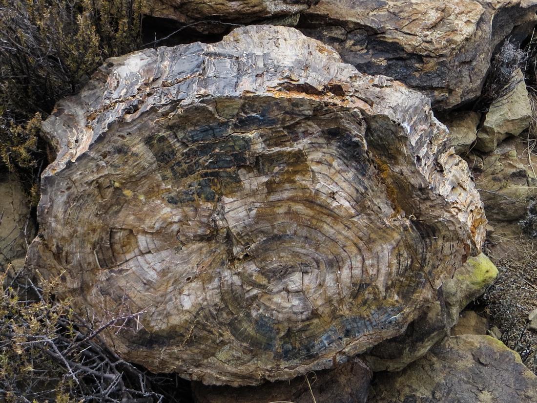 Fossilised tree, Karoo National Park