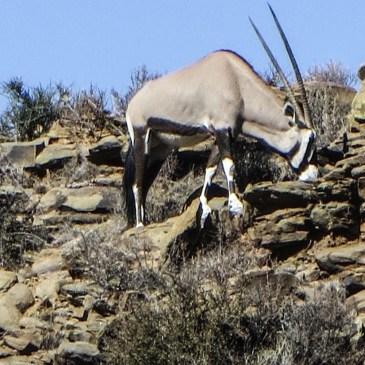 Potlekkertjie Circular Drive in the Karoo National Park