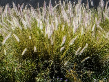 Grasses in the veld betweeen Graaff Reinet & PE