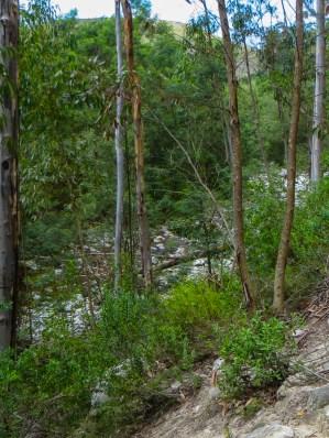 Downhill at Suurbraak