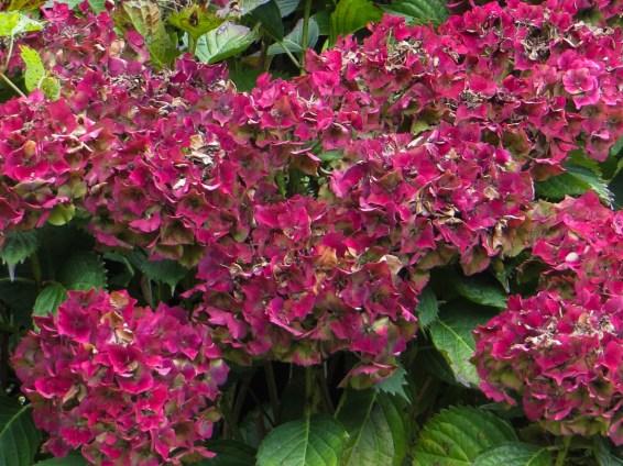 Flowers in Le Cloitre-Pleyben
