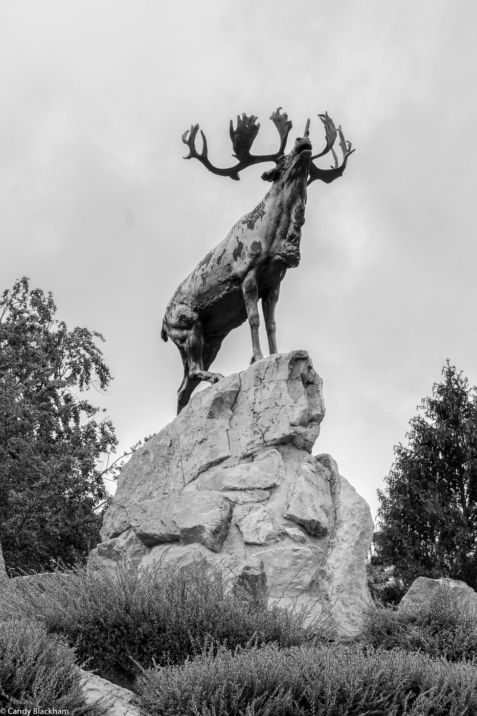 The caribou memorial at Beaumont-Hamel