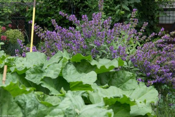 Cranbrook Estate Community Garden