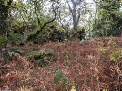 Amongst the Rocks of Cragou
