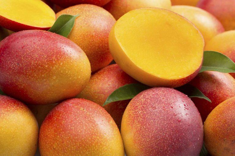 Mango guinness world record