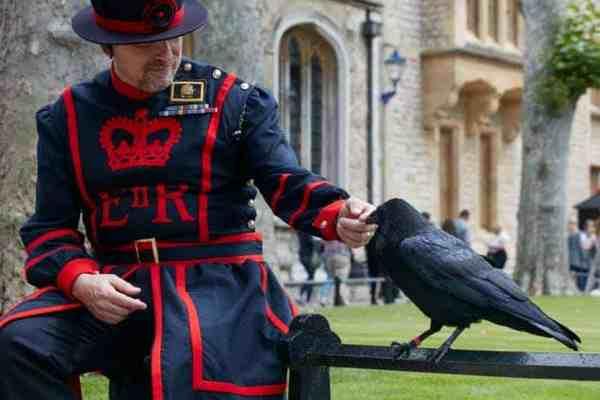 corvi torre di londra