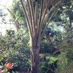 royal botanic garden 002
