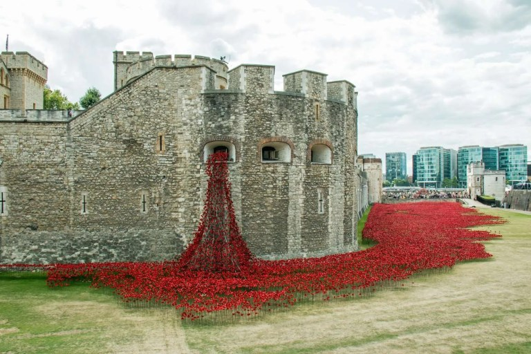 22677004_poppies-at-the-tower