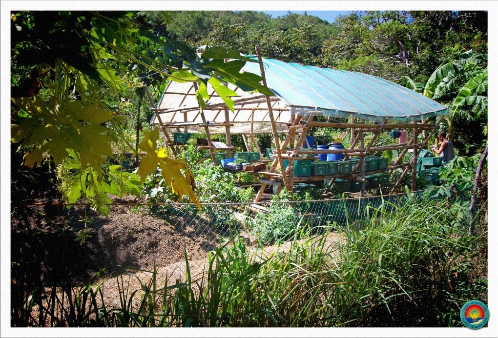 Besichtigung der Tao Farm