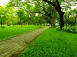 Green..