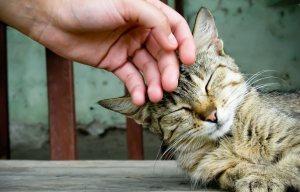 petting-my-cat-wallpaper