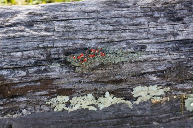 Context photo for Lichen in Bloom