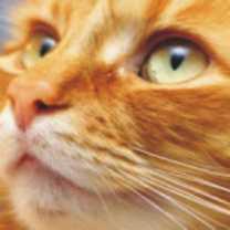 cat-totem-300-150x150