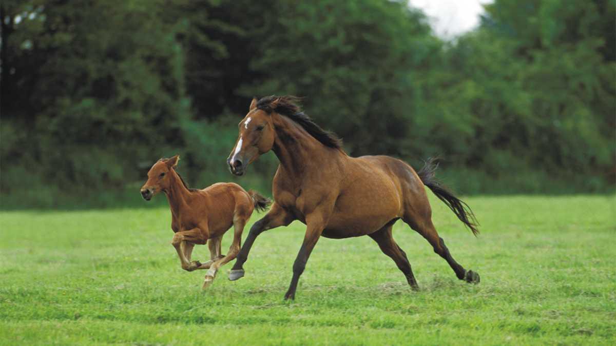horse spirit animal -- animal spirit horse