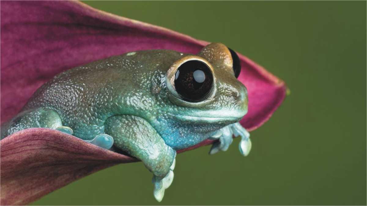 frog animal spirit -- animal spirit frog