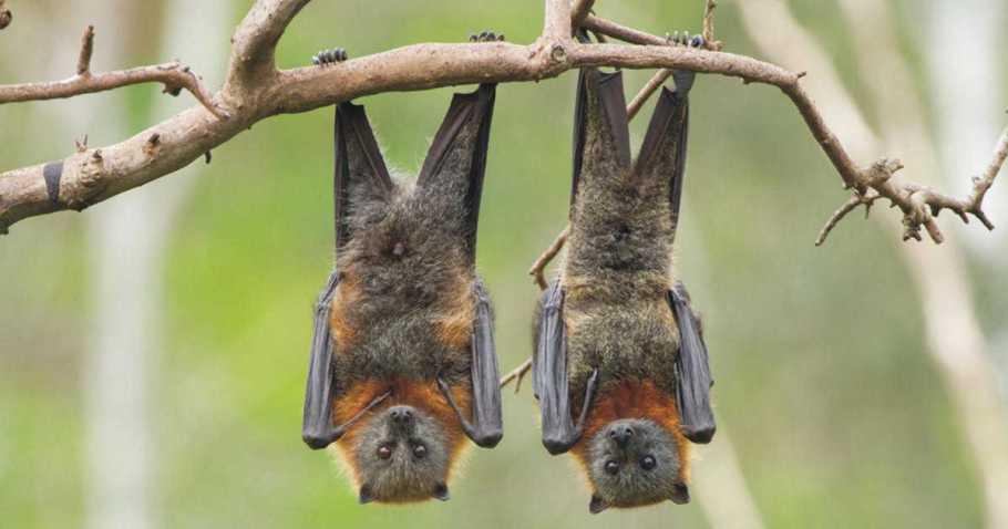 bat spirit animal meaning