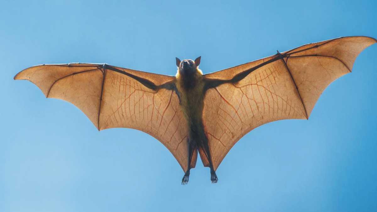 animal spirit bat
