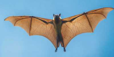 Animal Spirit Bat: What Does Bat Animal Spirit Say About You?