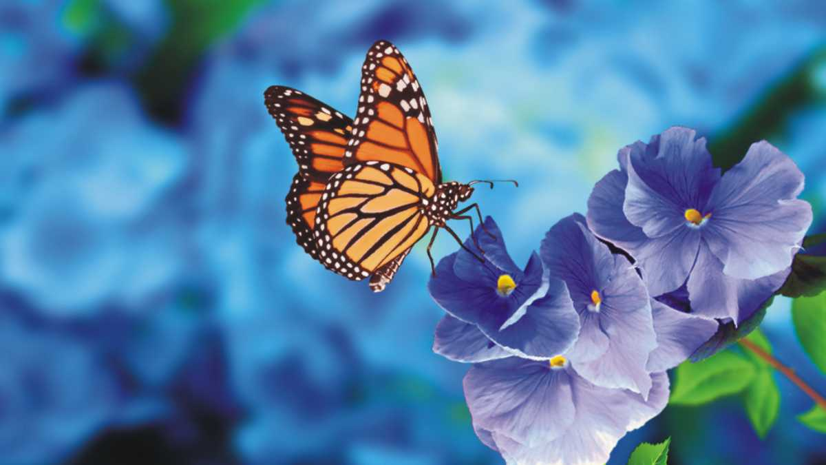 butterfly spirit animal meaning -- animal spirit butterfly