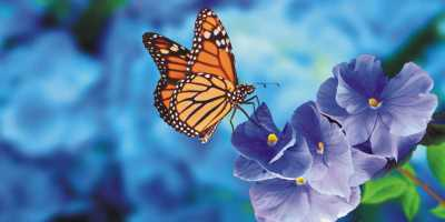 Animal Spirit Butterfly: What Does Butterfly Animal Spirit Say About You?