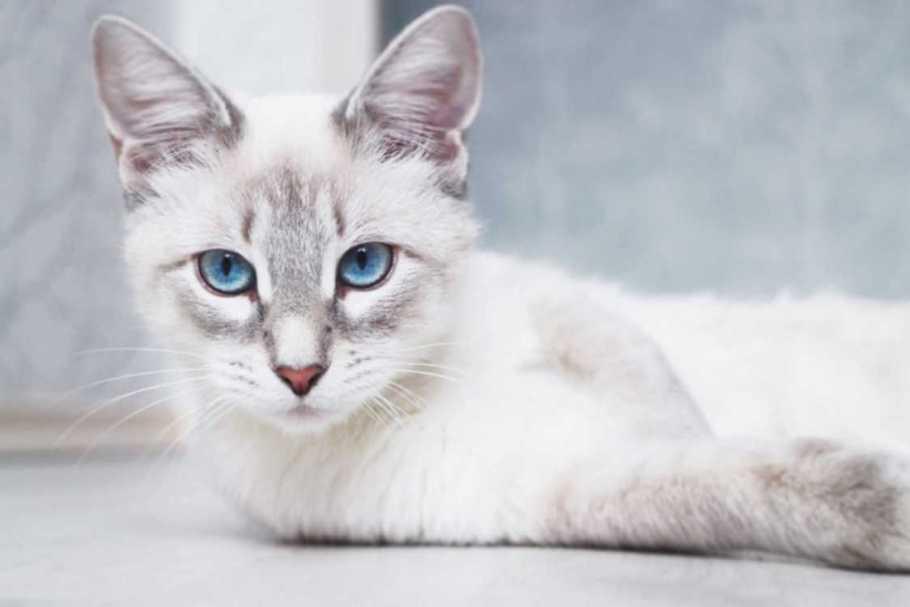 animal spirit cat, black cat spirit animal meaning