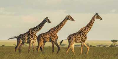 Animal Spirit Giraffe: What Does Giraffe Animal Spirit Say About You?