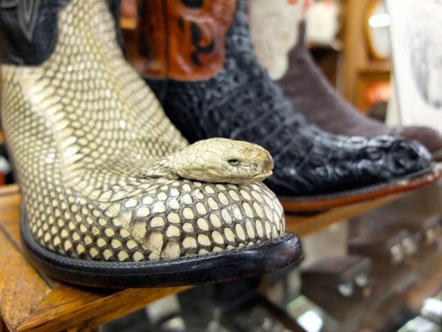 Allens Boots Austin Texas, Allen's Boots, Allen's Boots South Congress, Allen's Boots Texas, Snake Head Boot, Snake Boot