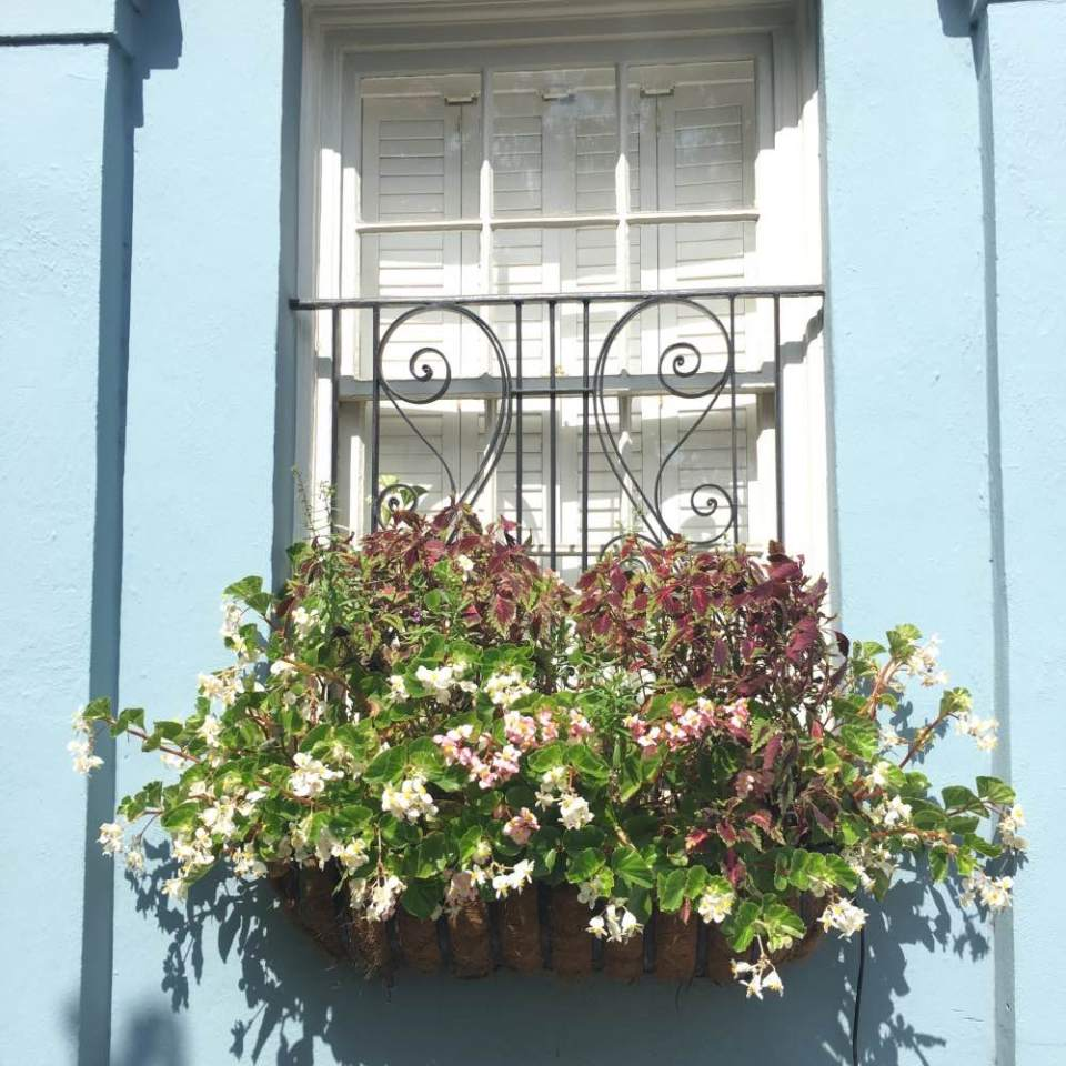 Charleston_Window_Boxes