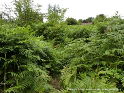 We took the wrong path up the hillside though, it was a bit overgrown....