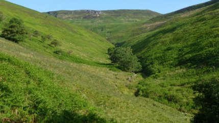 Looking up Jaggers Clough