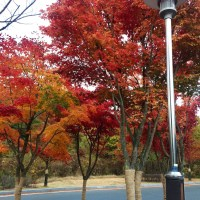 AUTUMN FOLIAGE IN ULSAN