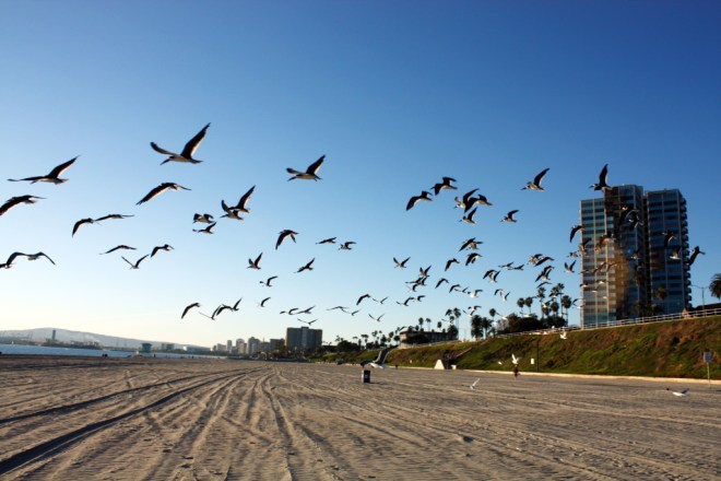 Long_Beach_California