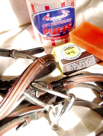 How often you should clean your horse tack!
