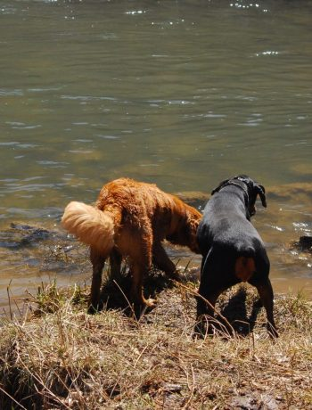 Maverick and Poppy at the water