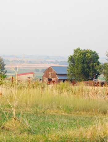 View of old barn across a field.