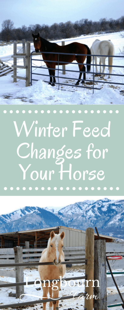 Diet changes for feeding horses in winter don't have to be huge or difficult, often small changes will set your horse up for success in the cold weather.