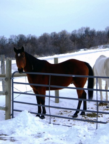 feeding horses in winter