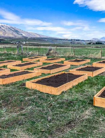 Build and filled raised planter garden boxes.