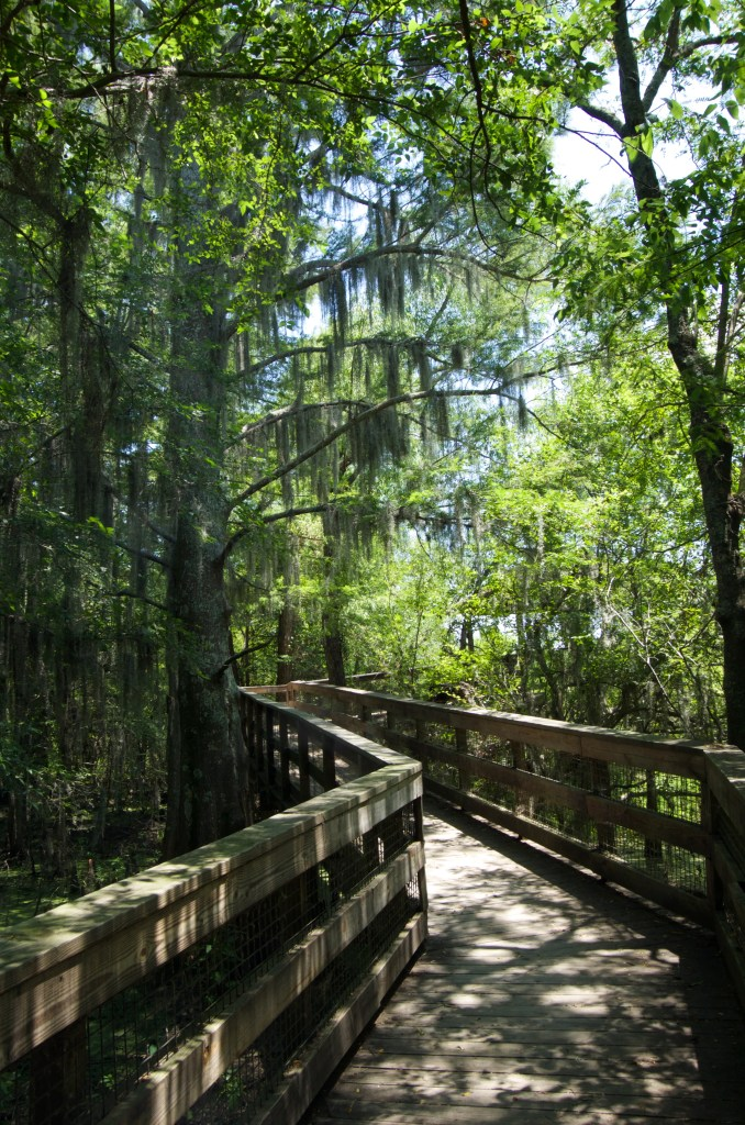 Black Bayou Lake, Monroe, Louisiana | longdistancebaking.com