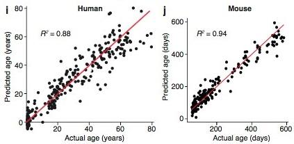 Genetic Brain Aging Clock