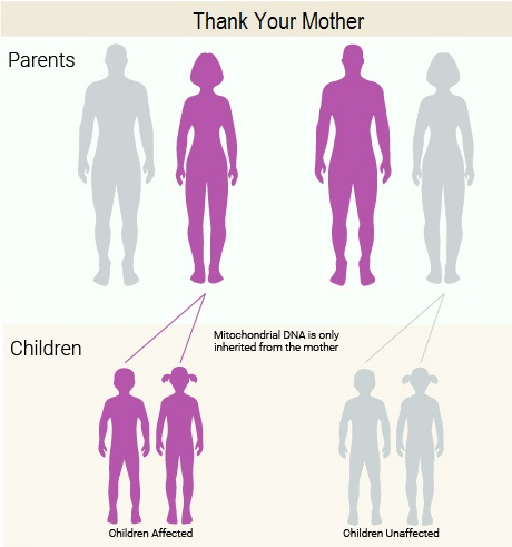 Thank your mother for your mitochondrial DNA.