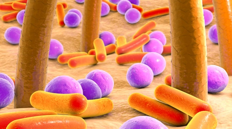 bacteria inhibits skin cancer