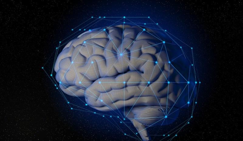 brain learns neural network neuron synapse dendrite hebbs axiom